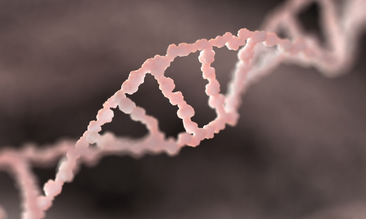 Image of DNA double helix